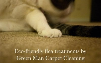 Eco-Friendly Flea Treament